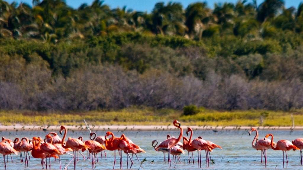 Flamingos at the Laguna de Oviedo