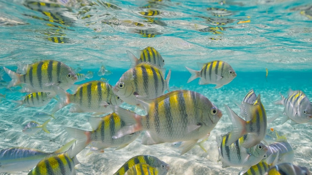 Many fishes while snorkeling in Cayo Arena