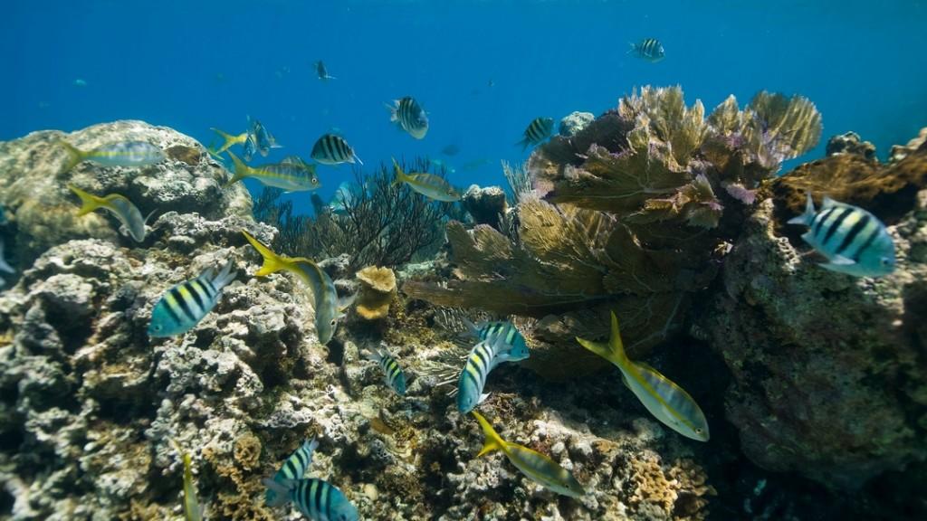 Stunning underwater world while snorkeling at Cayo Arena