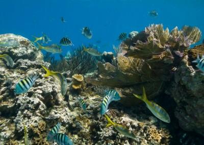 Stunning underwater world
