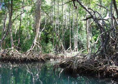 An excursion through the Los Haitises National Park