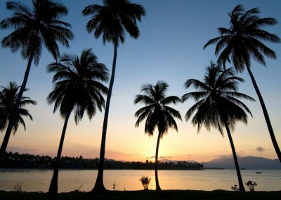 Palm trees at dusk, Las Galeras, Samana.